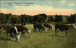 Cattle in Wisconsin Pasture Lands (Scenes Along the Country Roads)