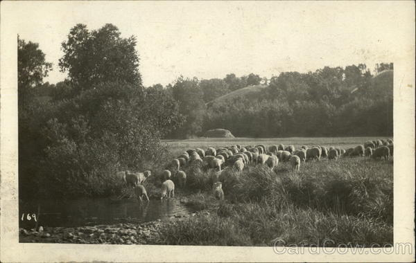 A Herd of Sheep in a Field Near a River Edgewood Wisconsin