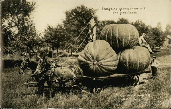 Pumpkins Grown on our Soil are Profitable Exaggeration