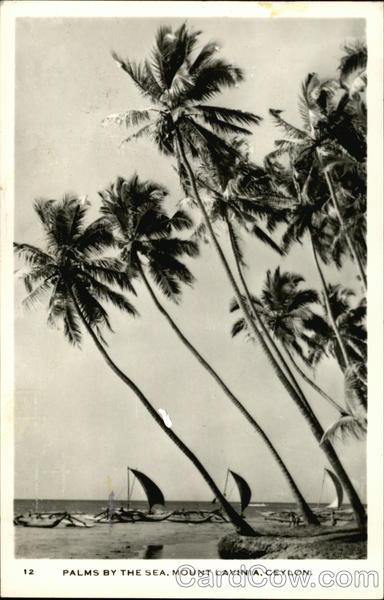 Palms by the Sea, Mount Lavinia Colombo Sri Lanka Southeast Asia