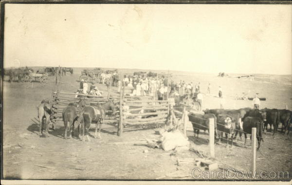 Cattle Roundup Gathering Cowboy Western