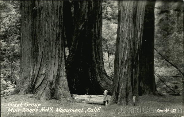 Giant Group, Muir Woods National Monument California