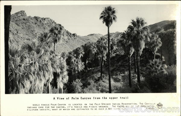A View of Palm Canyon from the Upper Trail Palm Springs California