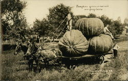 Pumpkins Grown on our Soil are Profitable