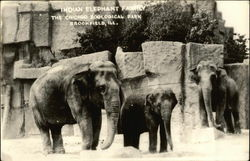 Chicago Zoological Park - Indian Elephant Family Postcard