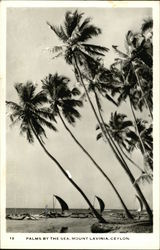Palms by the Sea, Mount Lavinia