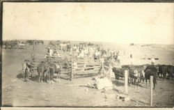 Cattle Roundup Gathering