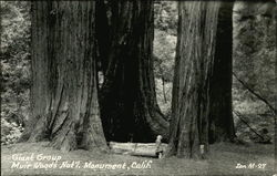 Giant Group, Muir Woods National Monument