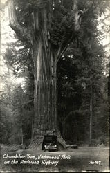 Chandelier Tree, Underwood Park on the Redwood Highway