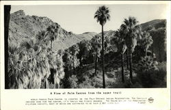 A View of Palm Canyon from the Upper Trail