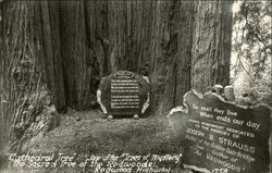 'Cathedral Tree' One of the 'Trees of Mystery' - Redwood Highway