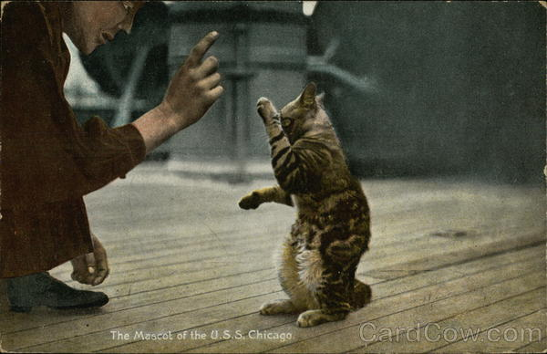 The Mascot of the USS Chicago Cats