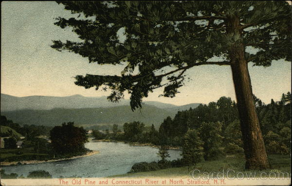 The Old Pine and Connecticut River North Stratford New Hampshire