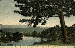 The Old Pine and Connecticut River