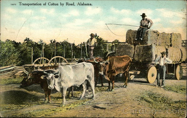 Transportation of Cotton by Road, Alabama Black Americana