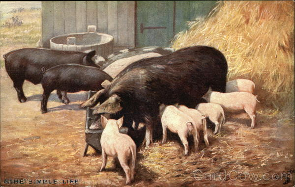 The Simple Life - Pigs & Piglets in the Barnyard