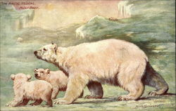 The Arctic Regions, three Polar Bears