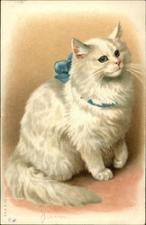 Fluffy White Cat with Blue Bow Around Neck
