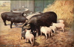 """The Simple Life"" - Pigs & Piglets in the Barnyard"