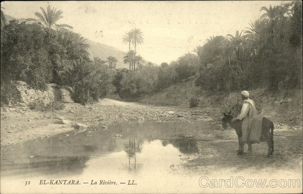 The River El-Kantara Algeria Africa