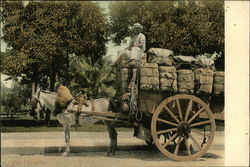 Donkey Cart With Bales of Tobacco
