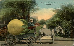 A Wagon Load of Grape Fruit, Florida