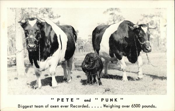 Pete and Punk Shartlesville Pennsylvania Cows & Cattle