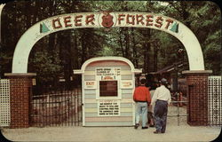 Deer Forest at Paw Paw Lake Postcard