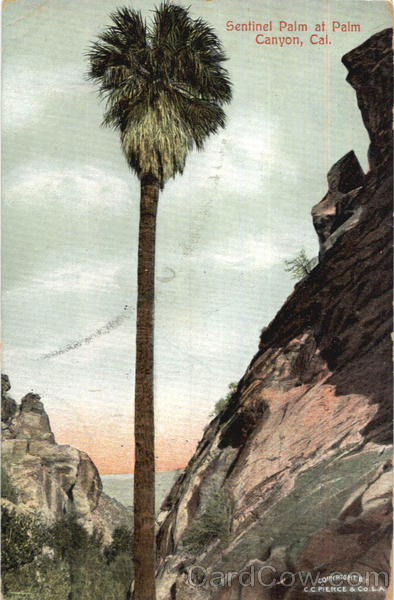 Sentinel Palm At Palm Canyon Scenic California