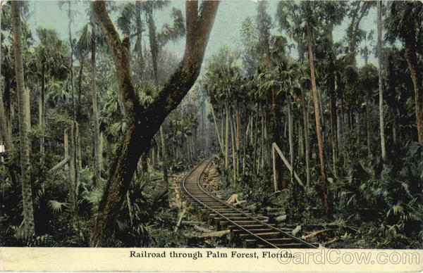Railroad Through Palm Forest Scenic Florida Railroad (Scenic)