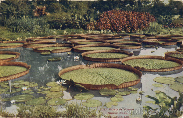 Lily Pond In Tower, Grove Park St. Louis Missouri