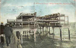 Net Haul On Young's Million Dollar Pier Postcard