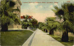 Tropical Scene On Tremont Street Postcard
