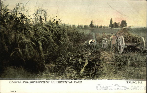 Harvesting, Government Experimental Farm Truro Canada