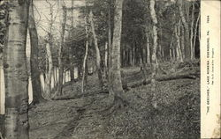 """The Beeches"", Lake Rowena"