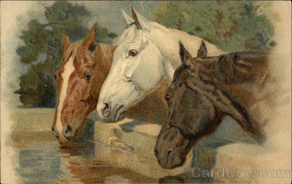Red, White and Black Horses Drinking from Trough