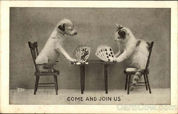Cat And Dog Playing Cards At Table Cats