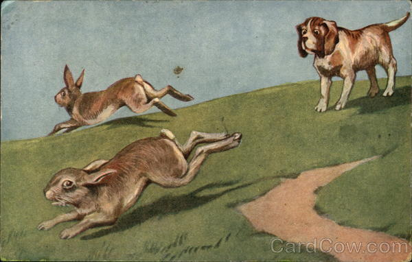 Dog Chasing Rabbits Dogs