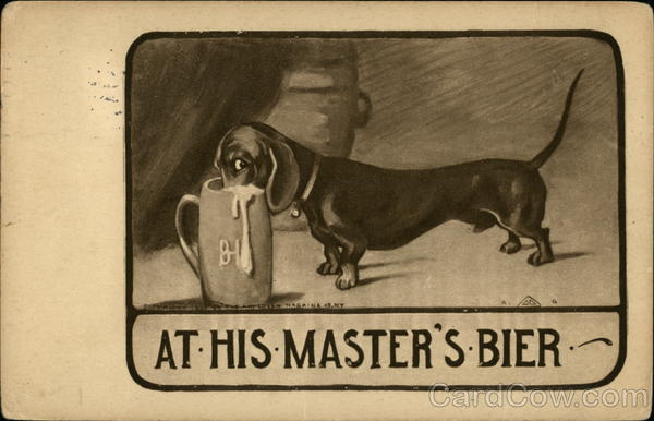 A Dachshund With His Nose In A Beer Stein Dachshunds