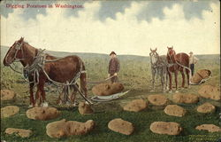 Farmers Bringing In Potatoes From Field