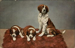 Three Saint Bernard Puppies on a Fur Rug Postcard