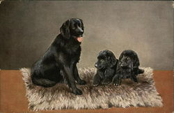 3 black dogs on a rug