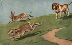 Dog Chasing Rabbits