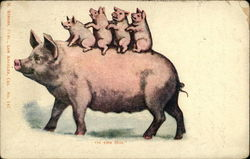 Four Baby Pigs Riding Momma Pig