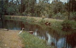 Okefenokee Swamp Park - Aquatic Bird Life