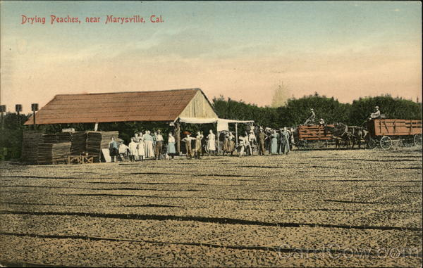 Drying Peaches Marysville California