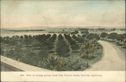 View of Orange Groves for Odd Fellows Home