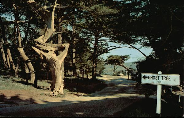 Ghost Tree Pebble Beach Ca