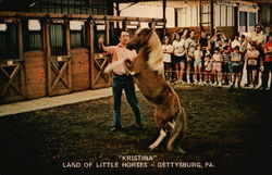 """Kristina"" - Land of Little Horses"
