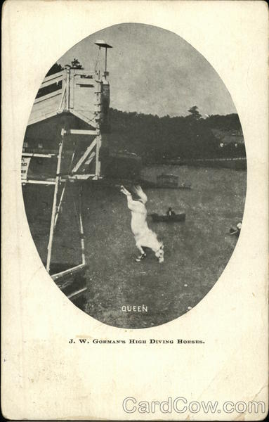 J.W. Gorman's High Diving Horses Queen Circus